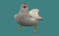 Нова кокошка