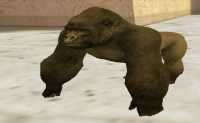 Malka Gorila